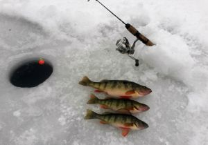 Jumbo Perch…Yummy!